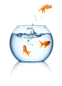 a-goldfish-jumping-out-of-the-fishbowl-PC8PU3J
